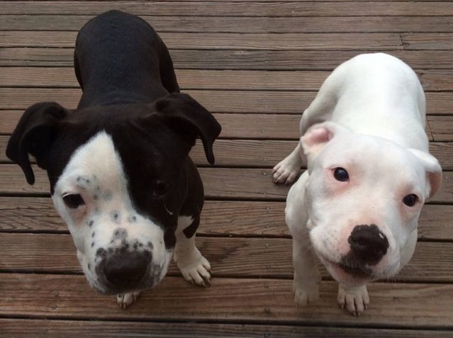 Clyde and his sister.